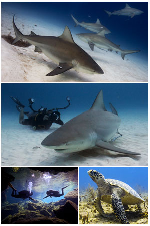 bull sharks diving expedition