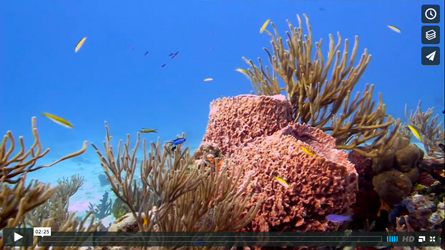 video about diving in cozumel